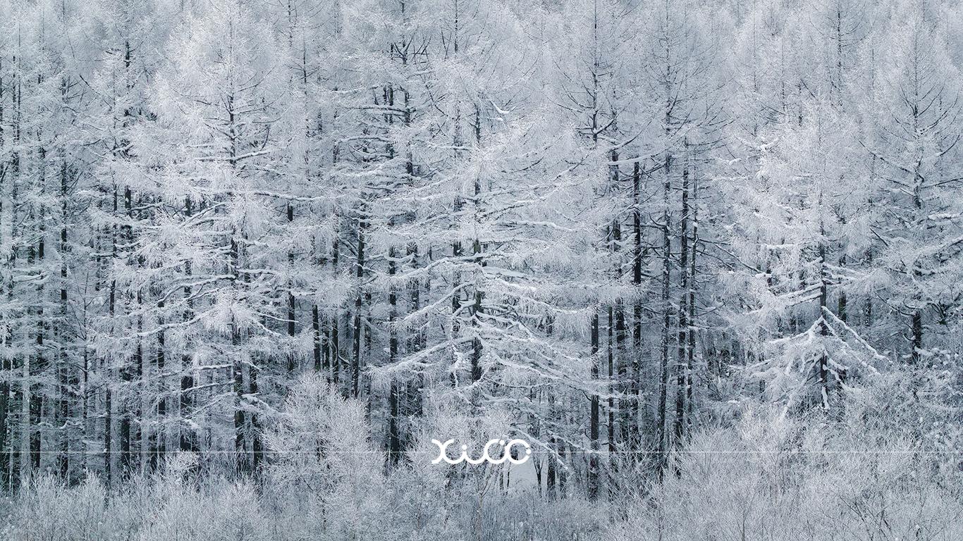 冬といえば雪!写真家に聞いたおすすめスポット4選